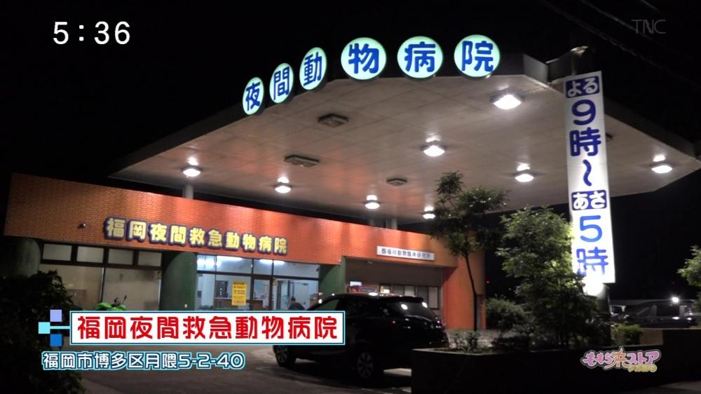 夜間 動物 病院 大阪どうぶつ夜間急病センター|大阪玉造の動物救急病院